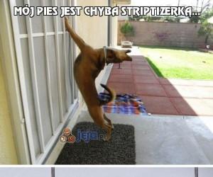 Mój pies jest chyba striptizerką...