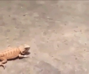 Ja stąd spadam!