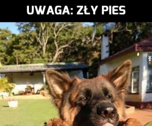 Kompilacja złych psów