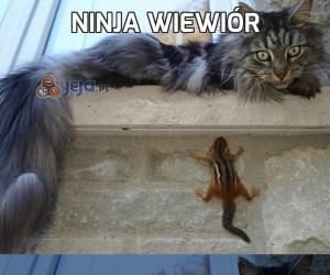 Ninja wiewiór