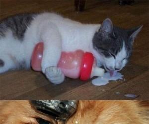 Jak kot pije