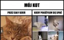 Koty takie są