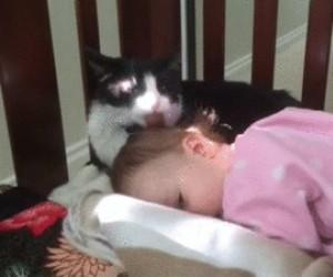 Opiekuńczy kot