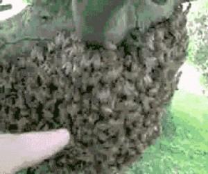Ręka w roju pszczół?