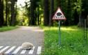 Uwaga na jeże na drodze!