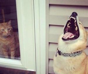 Zwierzaki też lubią się pośmiać