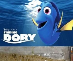 Dory odnaleziona!