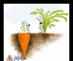 Różnica między mądrością a głupotą