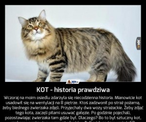 KOT - historia prawdziwa