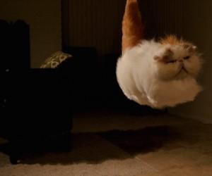 Lewitujący koteł