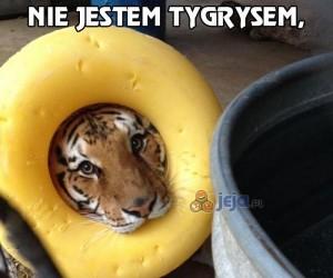 Nie jestem tygrysem