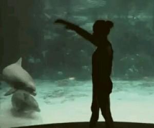 Delfin jest pod wrażeniem