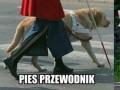 Pies przewodnik i...