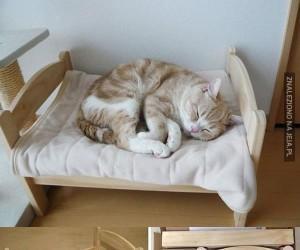 Łóżka dla zwierzaczków