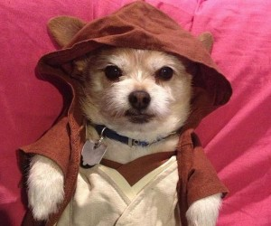 Dogi Wan-Kenobi