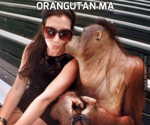 Orangutan ma