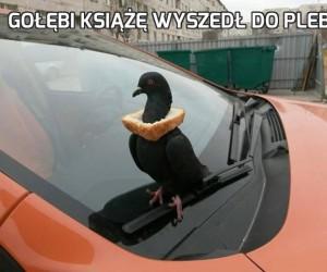 Gołębi książę wyszedł do plebsu