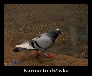 Karma to dz*wka