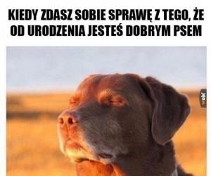 Pies zen