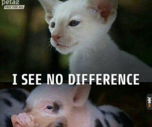 Weganie nie rozróżniają zwierząt
