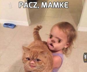 Pacz, mamke