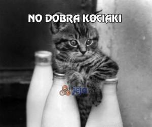 No dobra kociaki, to kiedy pijemy?