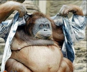 Małpa biznesu