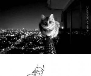 Co tak siedzisz, koteł? Aha.