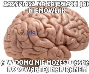 Nienawidzę swojego mózgu...