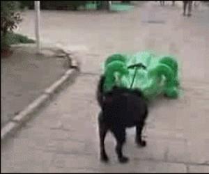 Biedny zwierzak