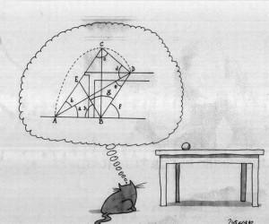 Kot matematyk