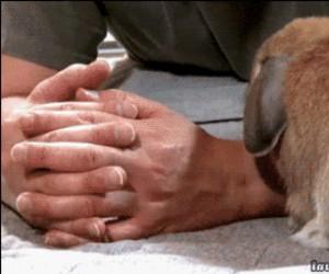 Ten królik chyba bardzo lubi głaskanie