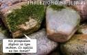 Mówi kamień do kamienia...