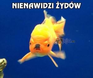 Zła rybka Hitler