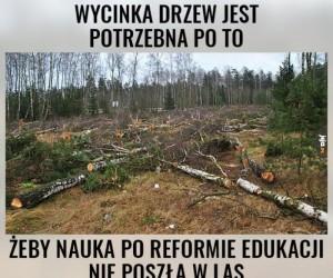 Dlaczego wycinamy drzewa