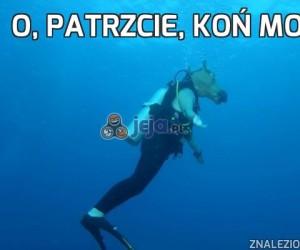 O, patrzcie, koń morski