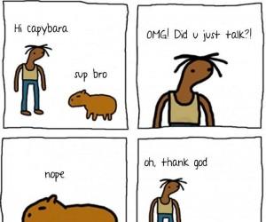 Siema, kapibara
