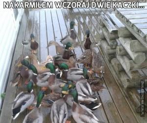 Nakarmiłem wczoraj dwie kaczki...