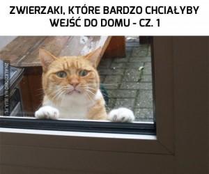 Zwierzaki, które bardzo chciałyby wejść do domu - cz. 1