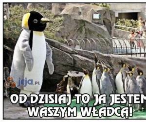 Nowy pingwini władca