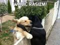 Walić rasizm!