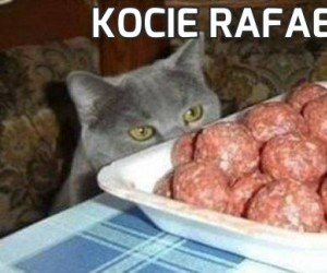Kocie Rafaello