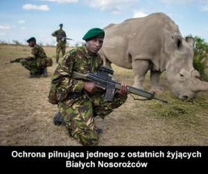Ochrona nosorożca
