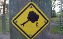 Uwaga na wielkie, spadające drzewa