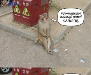 Małpi interes