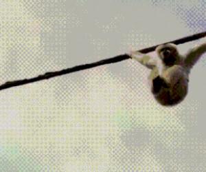 Przeklęte gołębie!