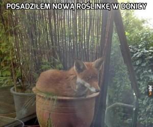 Posadziłem nową roślinkę w donicy