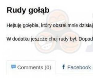 Rudy gołąb