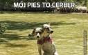 Mój pies to cerber
