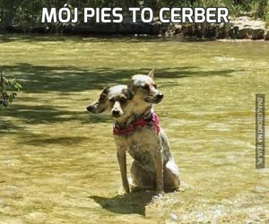 Mój pies to cerber